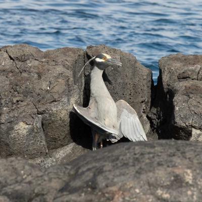 heron yoga